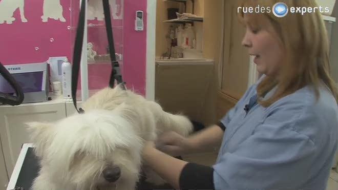 L'après shampoing pour chien