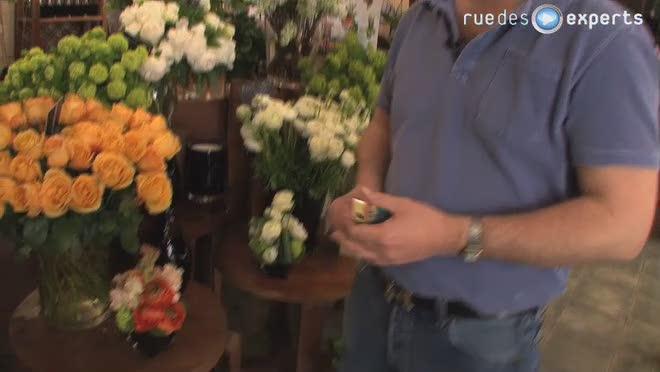 Arroser une plante?
